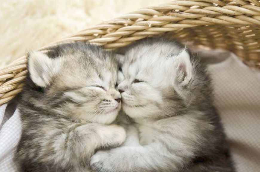 Kitty Go To Sleep Now Zzz Cute Cats Tabby Kitten Cute Animals