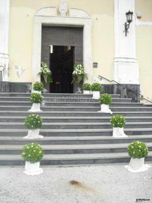 Addobbi con alberelli bassi verdi per l 39 esterno della for Alberelli da esterno
