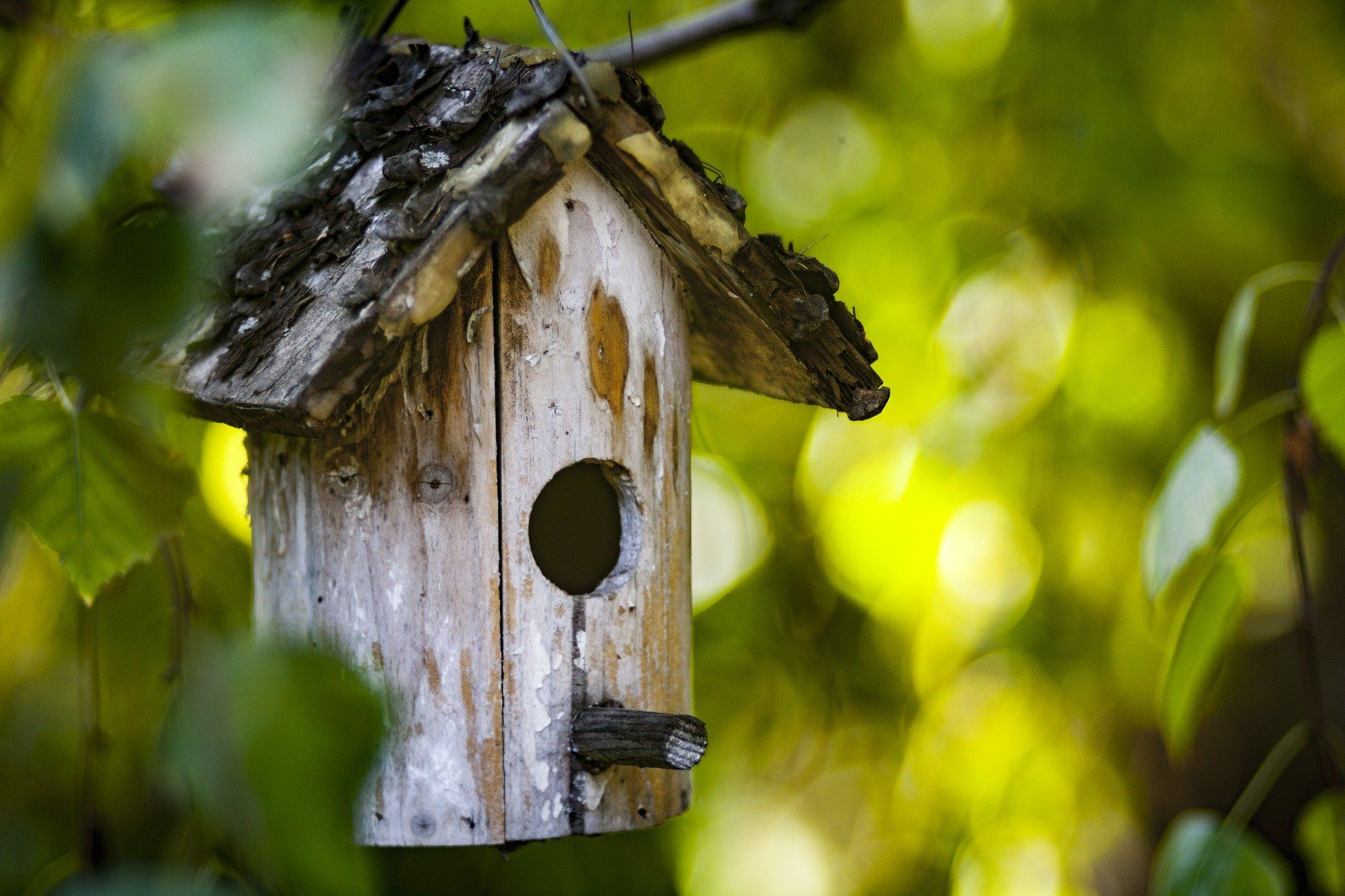 Attracting birds to your yard with baths feeders birds