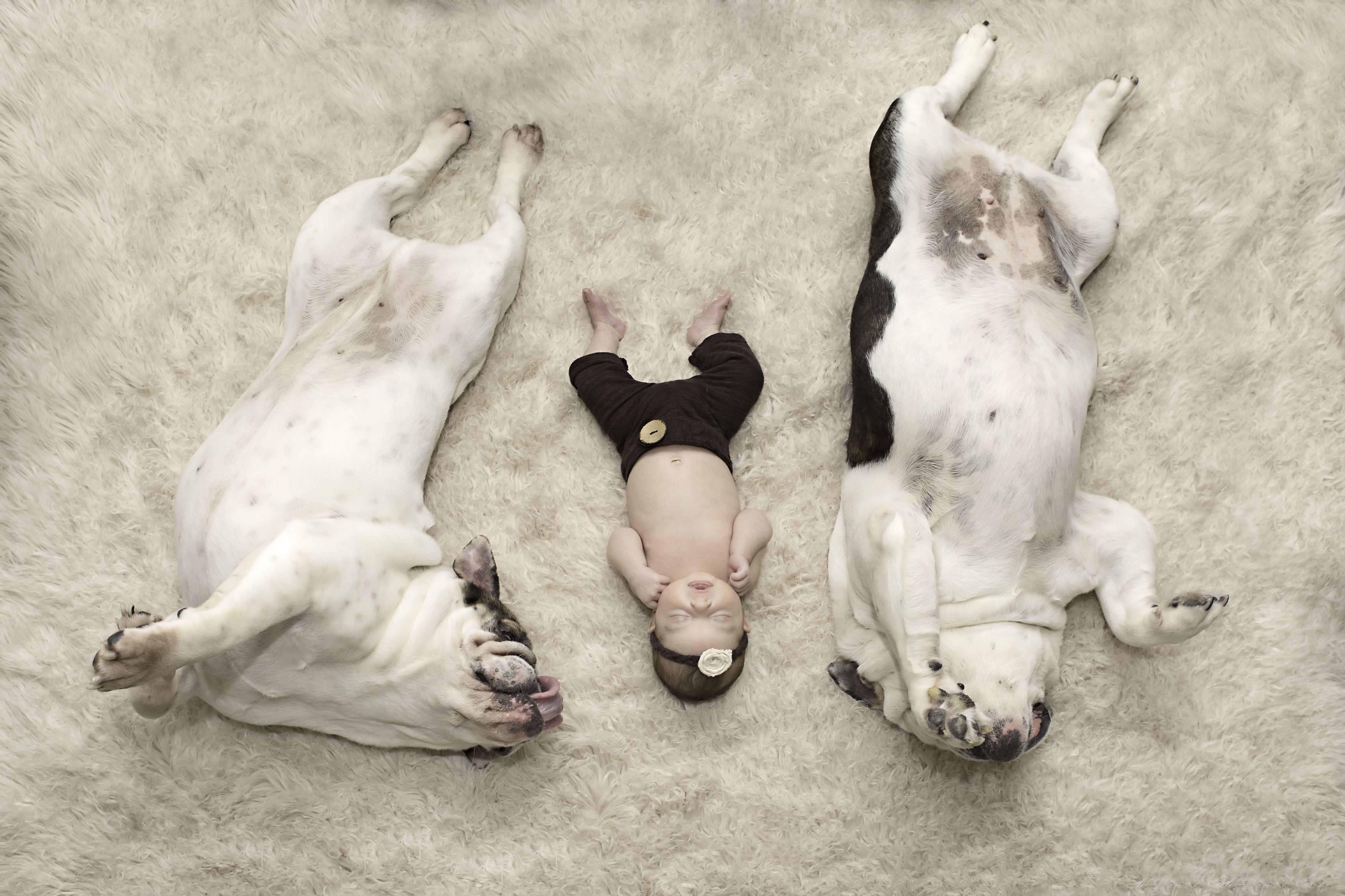 Newborn photography with dogs | English bulldog photography | Carol Ruth Photography