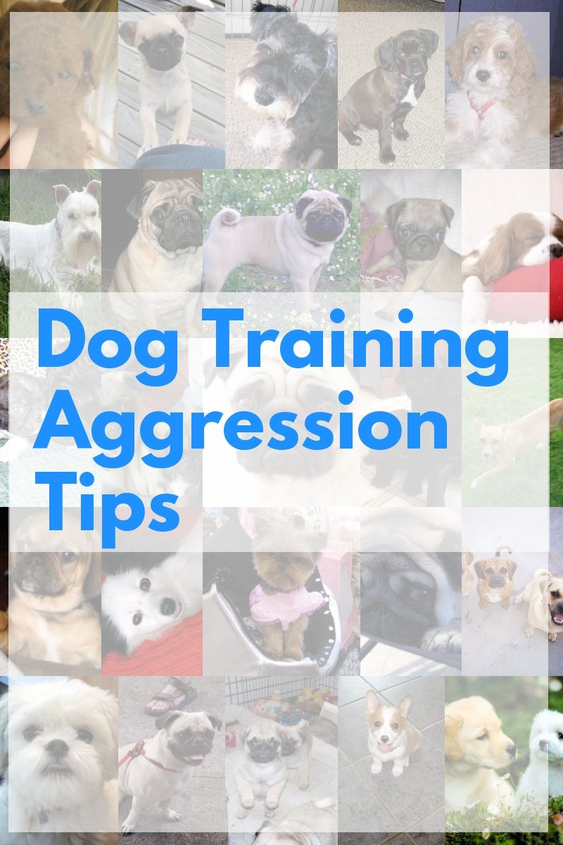 Great Ways To Help On Dog Training Aggression Tips More Details