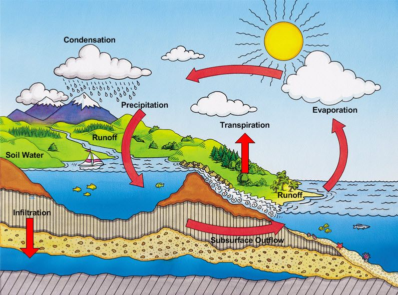 explain water cycle with the hlp of well labelled diagram ...