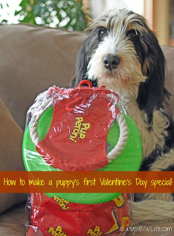 How To Make A Puppy's First Valentine's Day Special | My