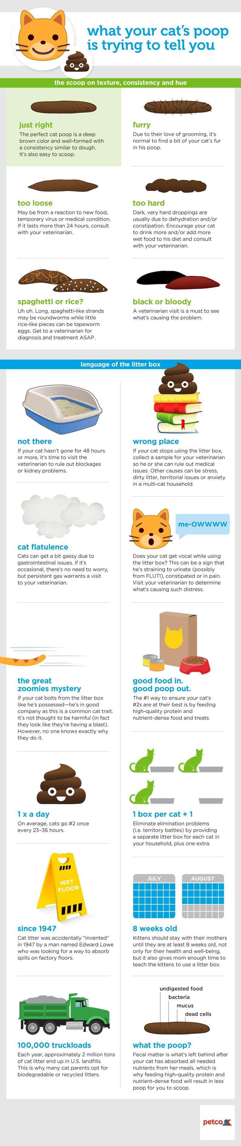 Pin On Cat S Health