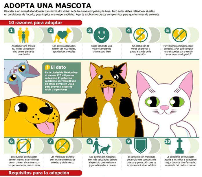 10 Razones Para Adoptar A Una Mascota Adoptar Un Perro Perros Mascotas
