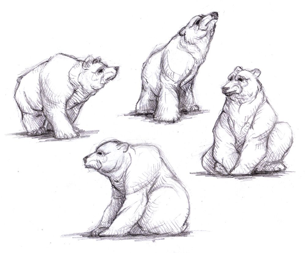 how to draw a polar bear google search drawing conclusions