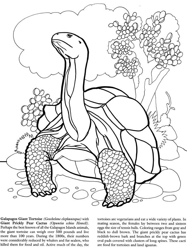 galapagos islands coloring book dover publications | coloring ... - Prickly Pear Cactus Coloring Page