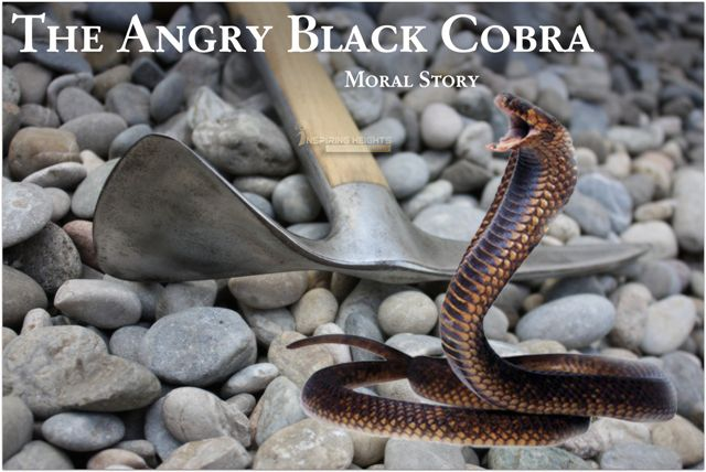 The Angry Black Cobra  – Moral Story