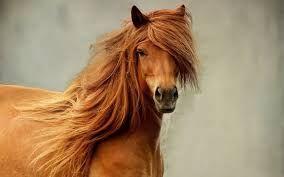 Bildergebnis für pferde fotos