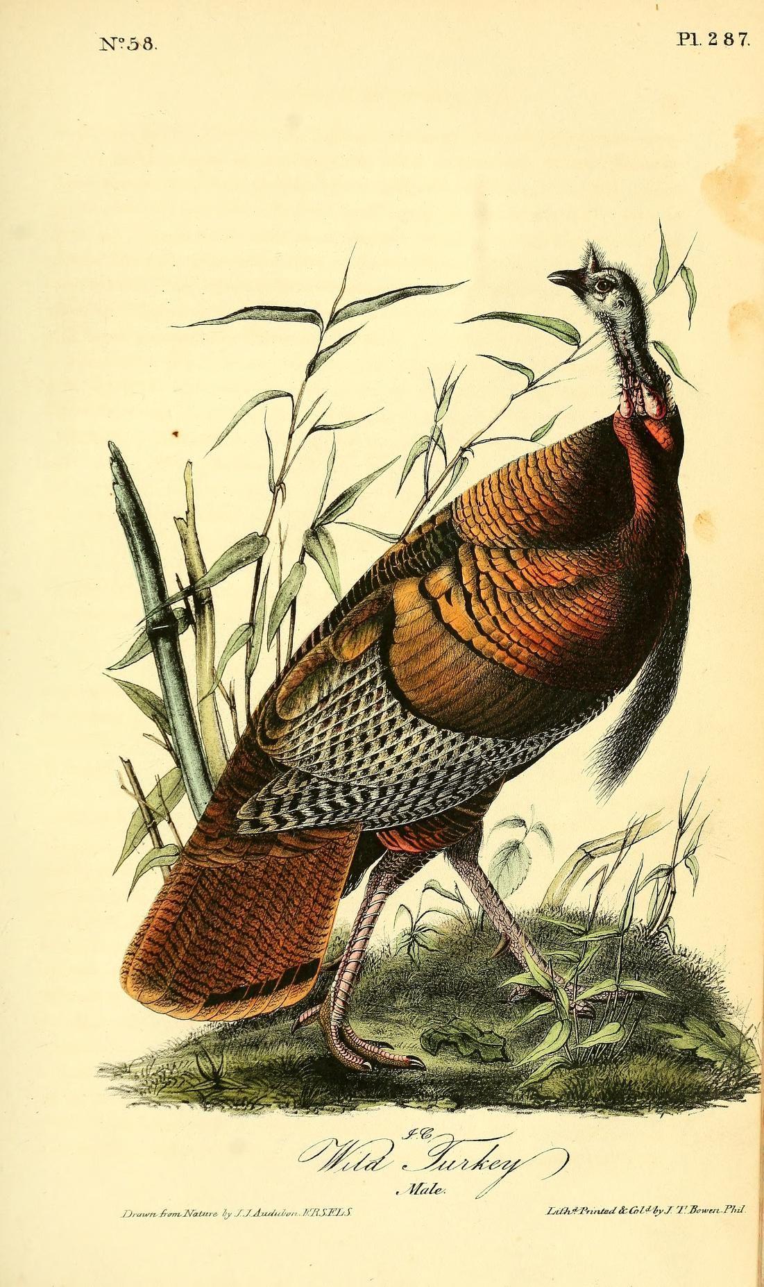 1842, v 5 - The birds of America by John James Audubon : The ...