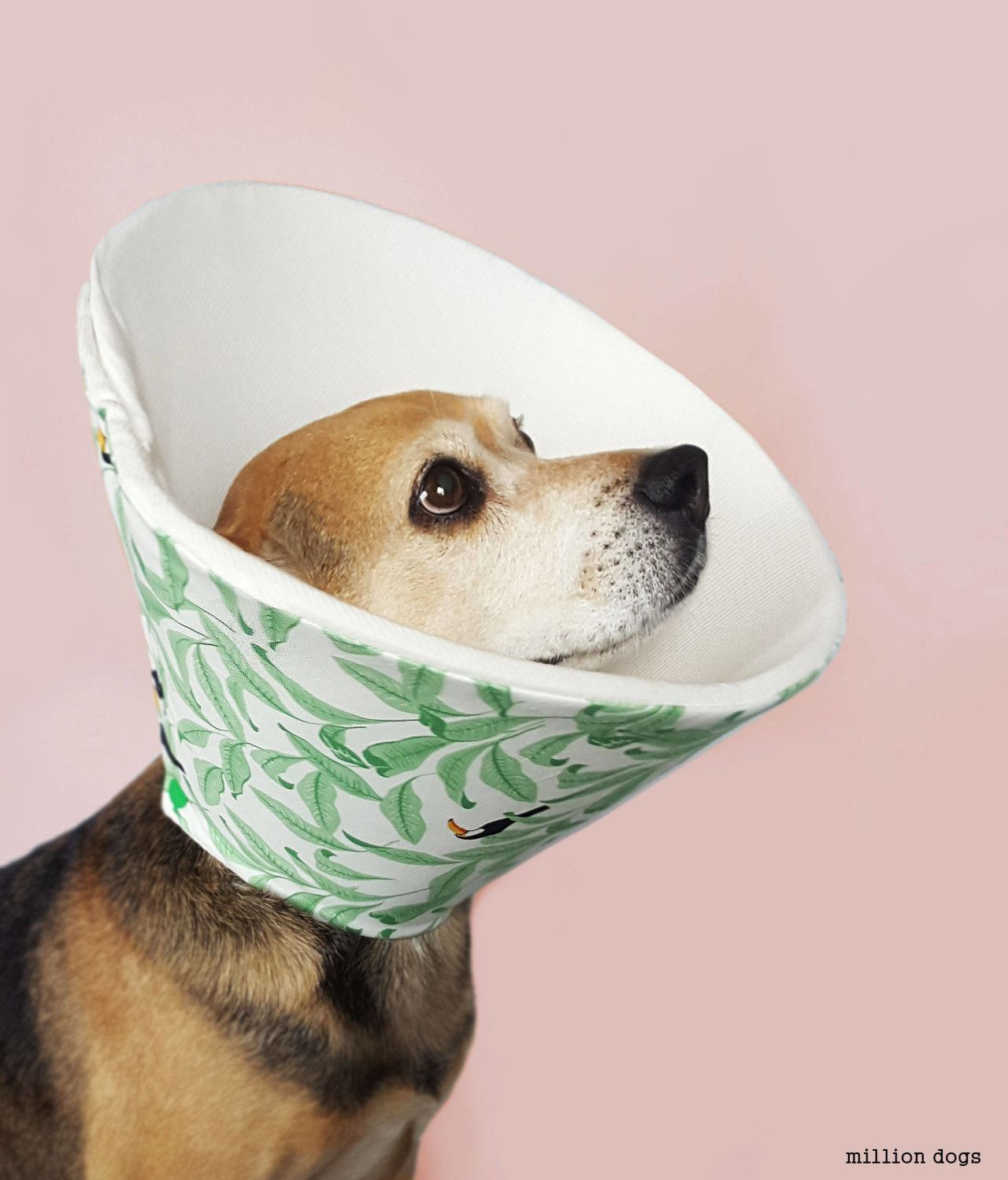 7 Alternatives To The Plastic Dog Cone Dog Cone Homemade