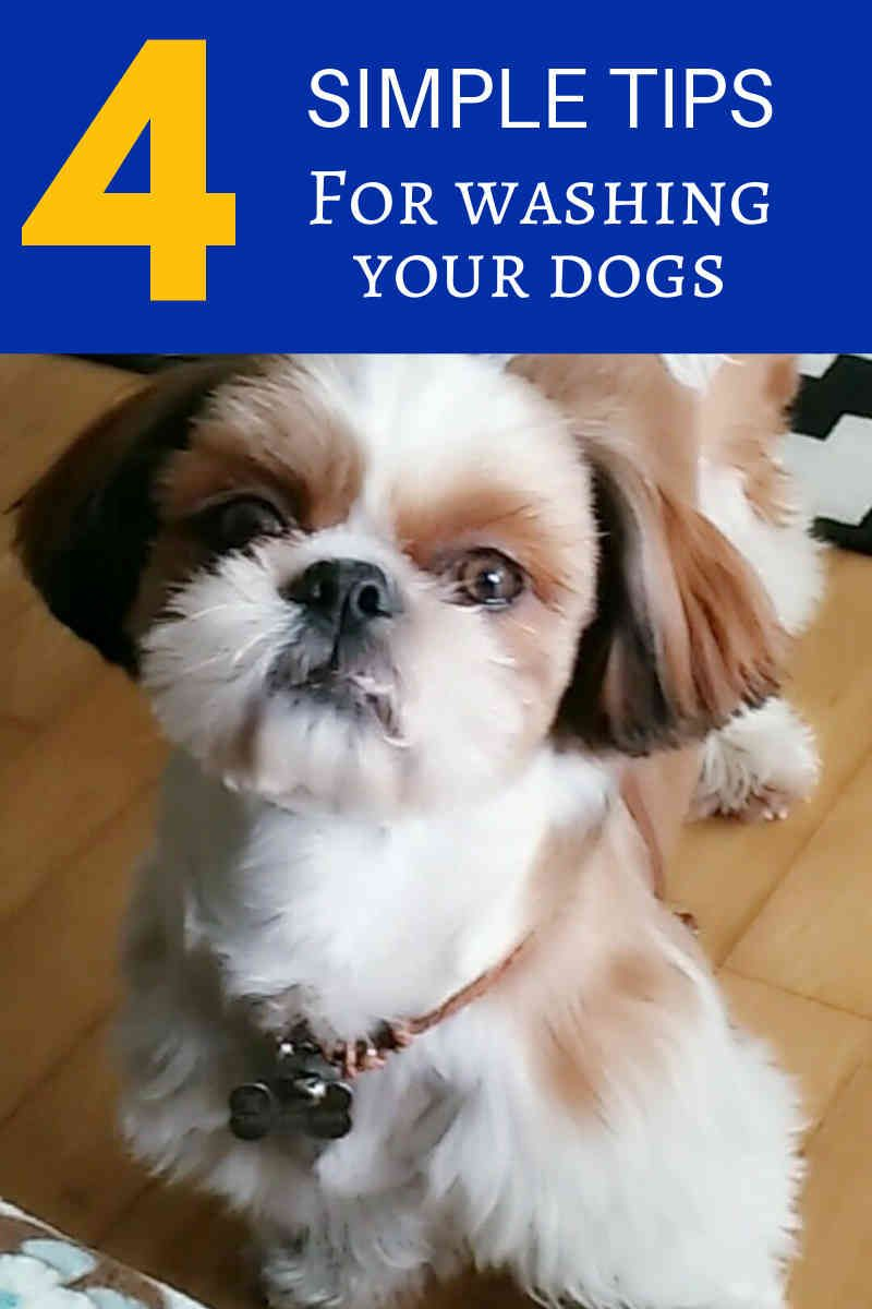 Grooming Your Dog At Home Dog Grooming Tips Dog Nails Dogs