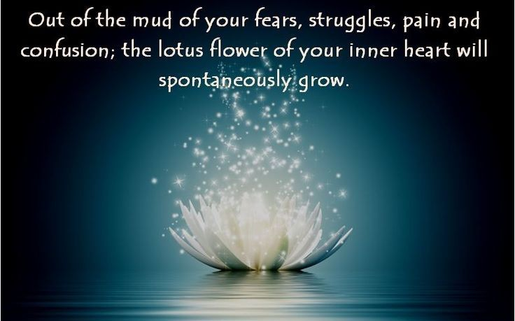 The Story Of The Lotus Flower Quotes Google Search Cookies
