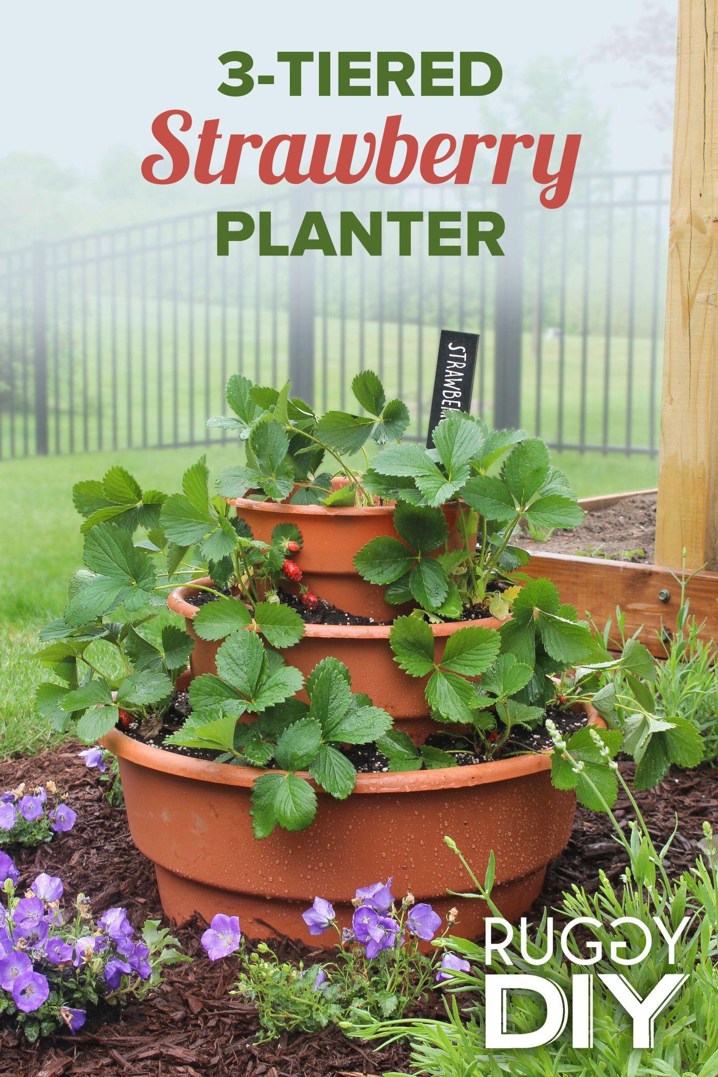 3 Tier Strawberry Planter Strawberry Planters Strawberry Garden