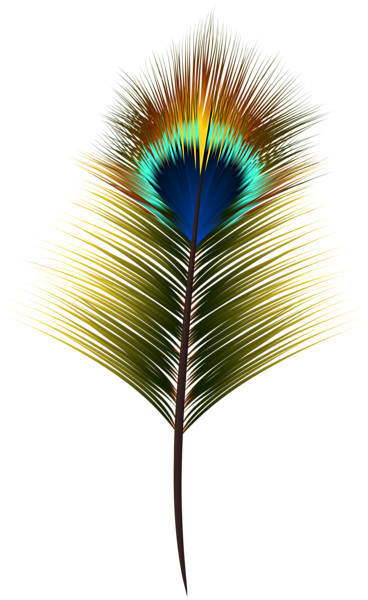 Peacock Feather Png Clip Art Peacock Feather Black Background Images Clip Art