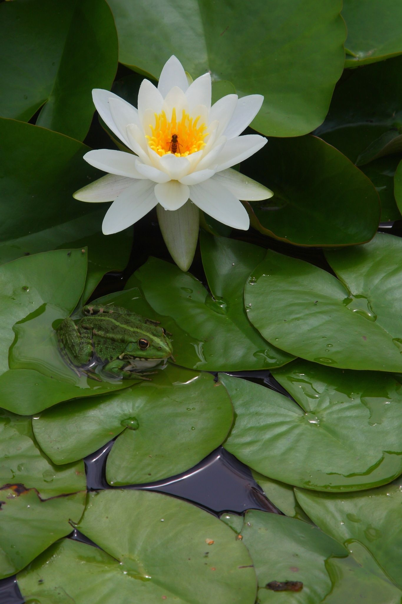 The prince and lily by lieve marchal on 500px places to visit the prince and lily by lieve marchal on 500px izmirmasajfo