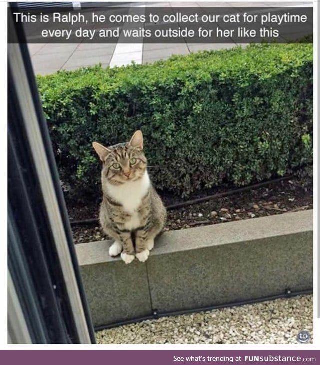 VV polite kitty friend doing a wait - FunSubstance