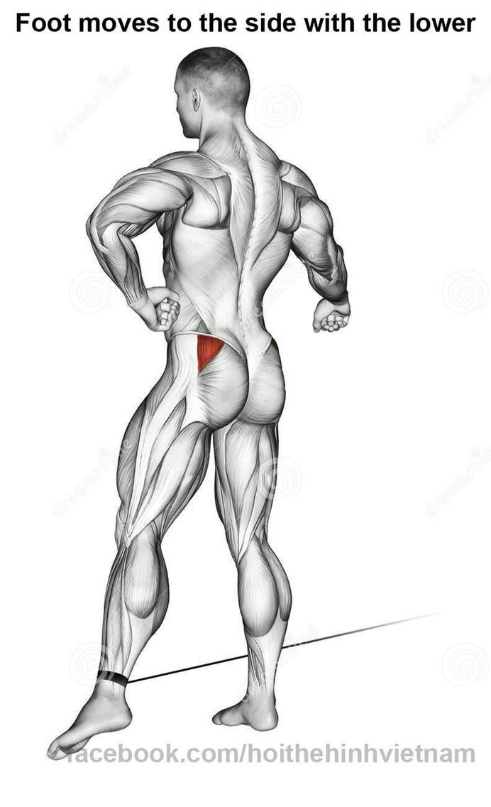 Add polea | Fisiologia/Anatomia Pierna y Gluteo | Pinterest ...