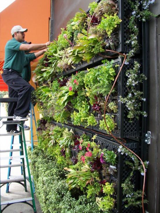 This takes veggie wall to new heights Aspirations Pinterest