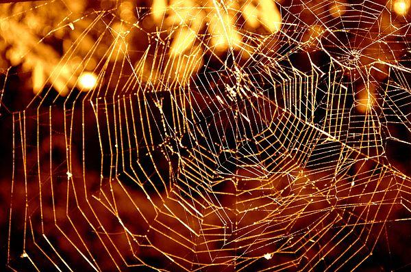 Web Spun Gold Gold Macro Cobweb Nature Spider Spiderweb Intricate Macro Spider Web Macro Nature Spooky Macro Photography Nature Bubbles Photography Spider Web