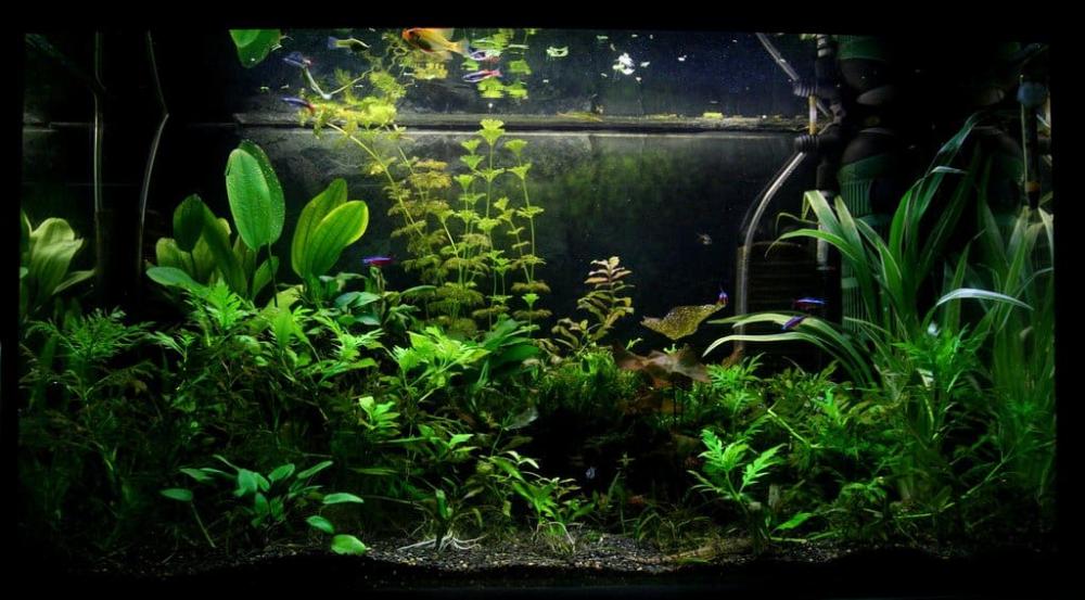 Best Substrate For Planted Tank In 2020 Reviews Guide Planted Aquarium Best Terrarium Plants Aquascape
