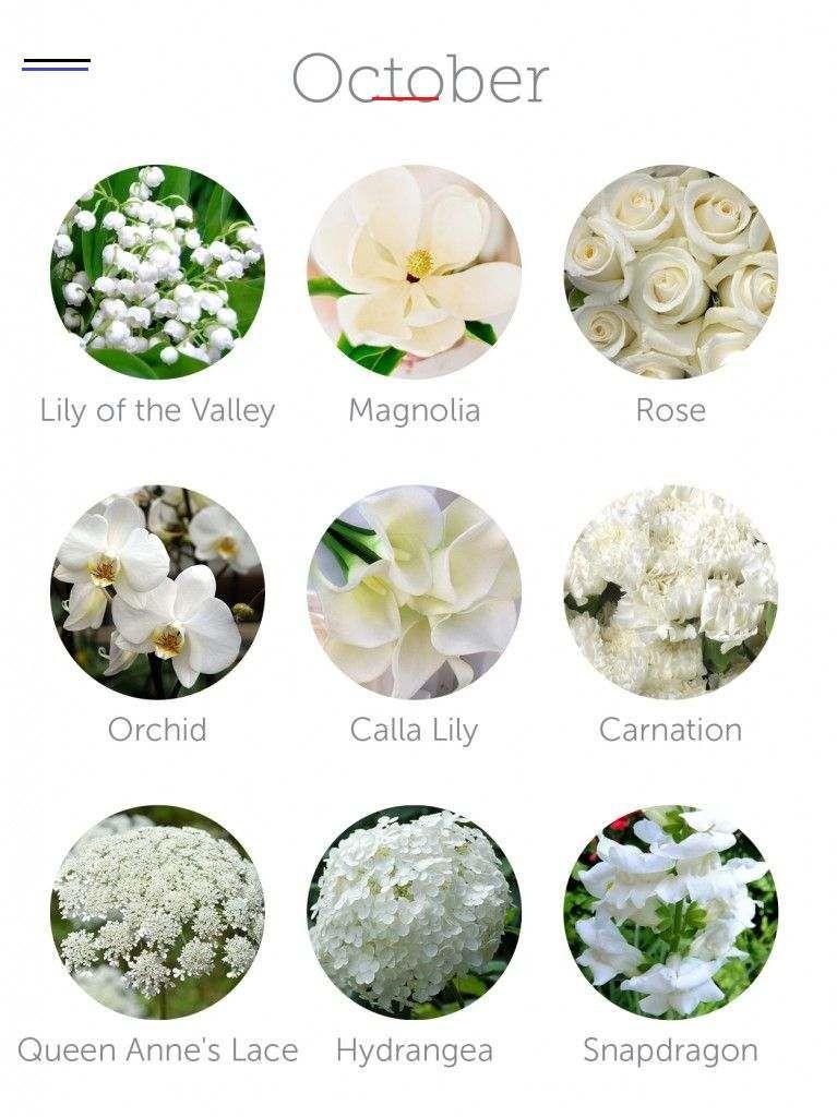 Wedding Budget Tip 16 Choose In Season Flowers To Save Money Weddingsbyseason If You Re Looking For A Way To Save Money Em 2020 Nomes De Flores Rosas Jardinagem