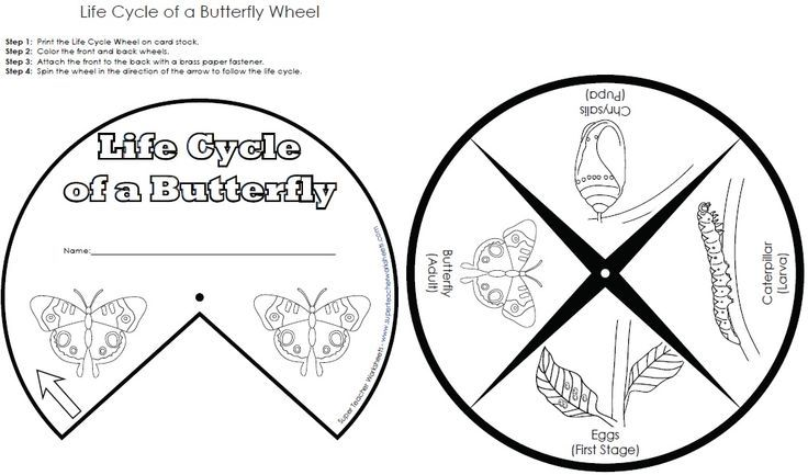 Common Worksheets » Life Cycle Of Butterfly Worksheet - Preschool ...