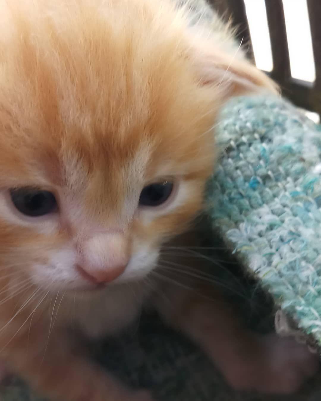 Watch My Kitten Grow Kitten Cute Chat Chaton Cat Kittens Cutest Cute Kitten Gif Kitten Meowing
