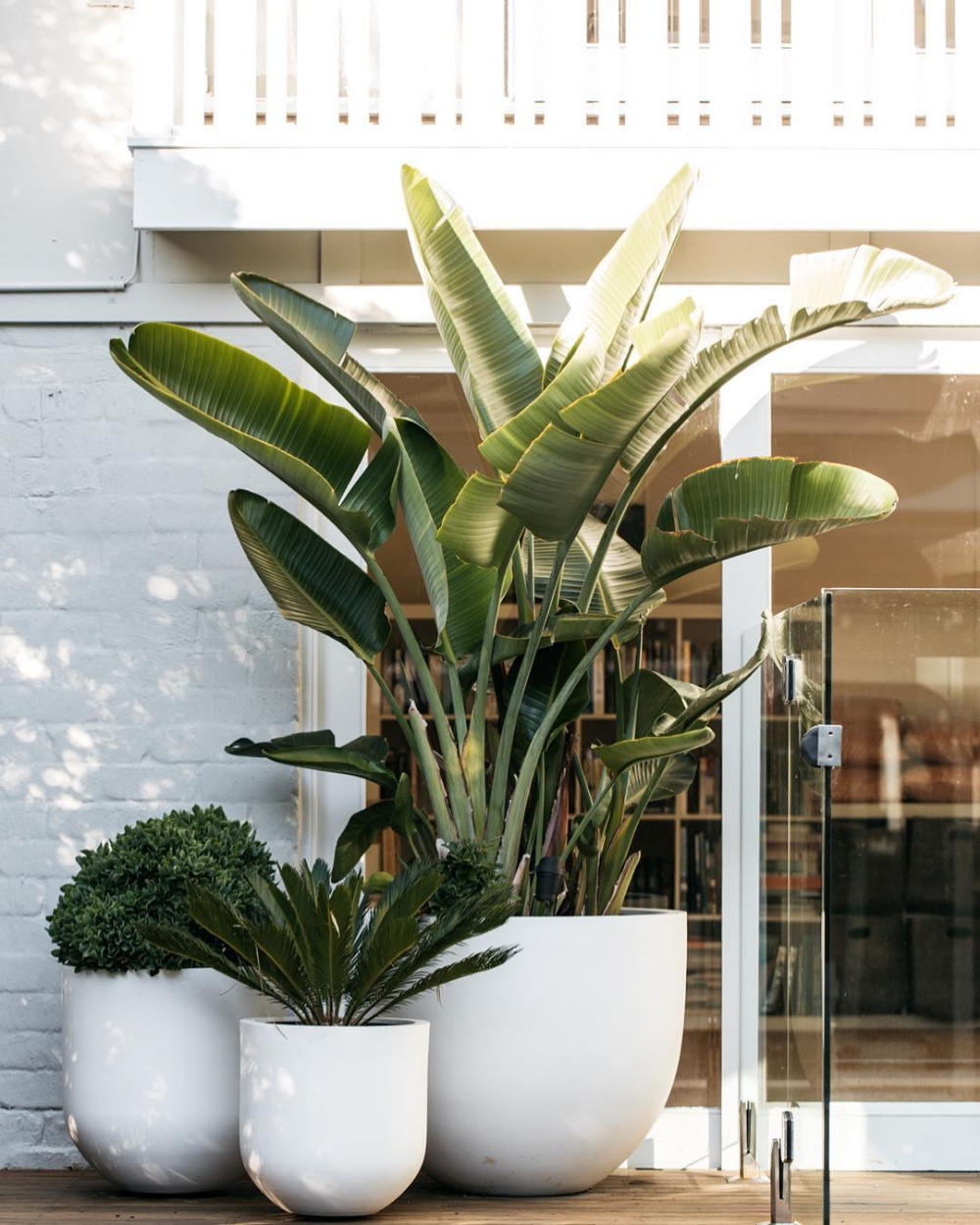 "F I G L A N D S C A P E S on Instagram: ""Resort style pot cluster at one of our projects. We are taking bookings in Byron Bay and surrounds. Get in touch, we'd love to hear from…"""