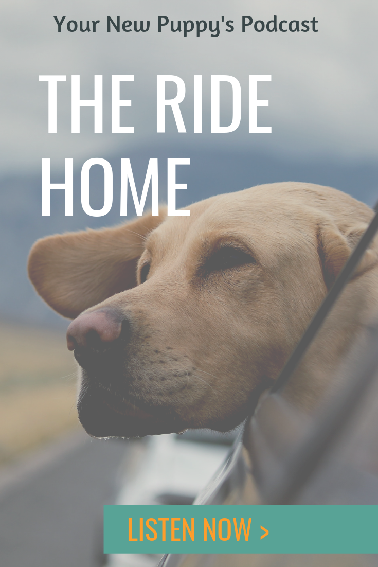 Ynp 029 The Ride Home New Puppy Dog Behavior Dog Training