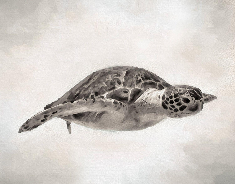 Sea Turtle Drawing, Sea Turtle Art, Sea Turtle, Sepia, Art Print ...