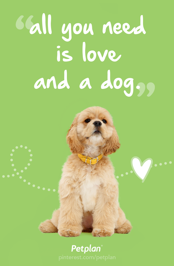 All You Need Is Love And A Dog 3 Best Pet Insurance Pet