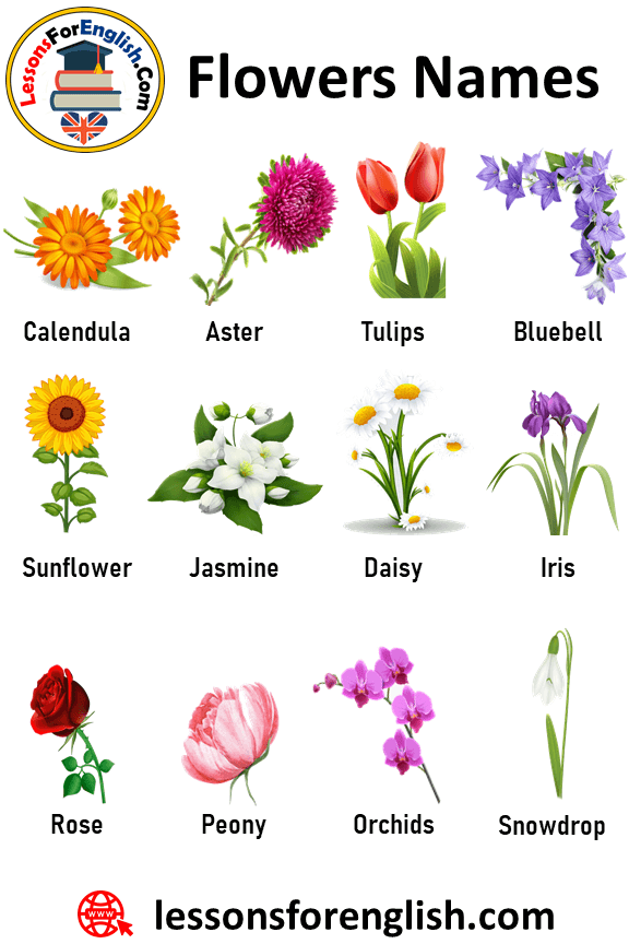 100 Flowers Names And Definitions Flowers Names Flowers Are Literally One Of The Most Impressive Works Of Nature Flower Names Flowers Name List Bulbous Plants