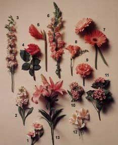 1 Miniature Carnation Dianthus Caryophyllus Nana Elegance 2 Stock Matthiola Incana 3 Larkspur Delphinium Ajacis Online Flower Shop Gerbera Jamesonii Flowers