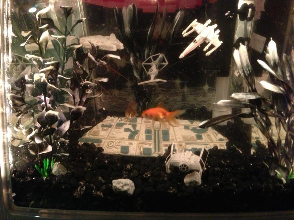 Star Wars Fish Tank Tyler Fish Tank Aquarium Setup