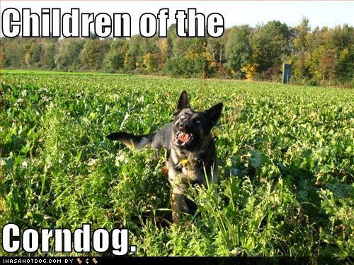 Funny Corn Memes Uploaded To Pinterest Good Humor Man Funny Dogs German Shepherd Funny