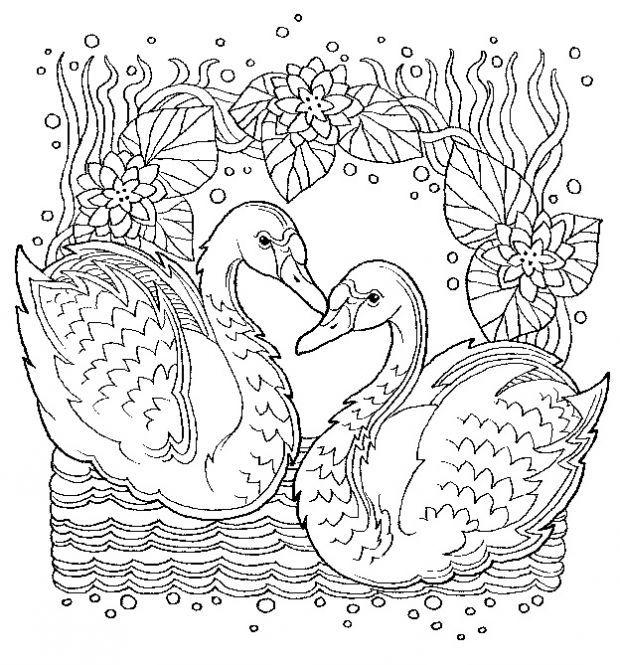 Zencolor Moments Vögel Schmetterlinge Colouring Pages