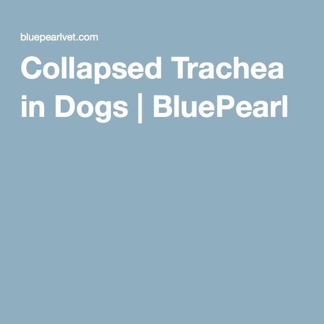 Collapsed Trachea In Dogs Bluepearl Trachea Collapse Dogs