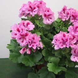 Комнатные цветы фото самых красивых с описанием ухода ...