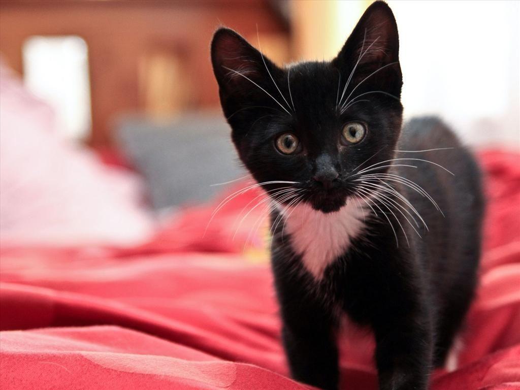 Epingle Par Ceciia Sur Les Chatons Fond D Ecran Chat Chat Noir Et Blanc Animaux Les Plus Mignons