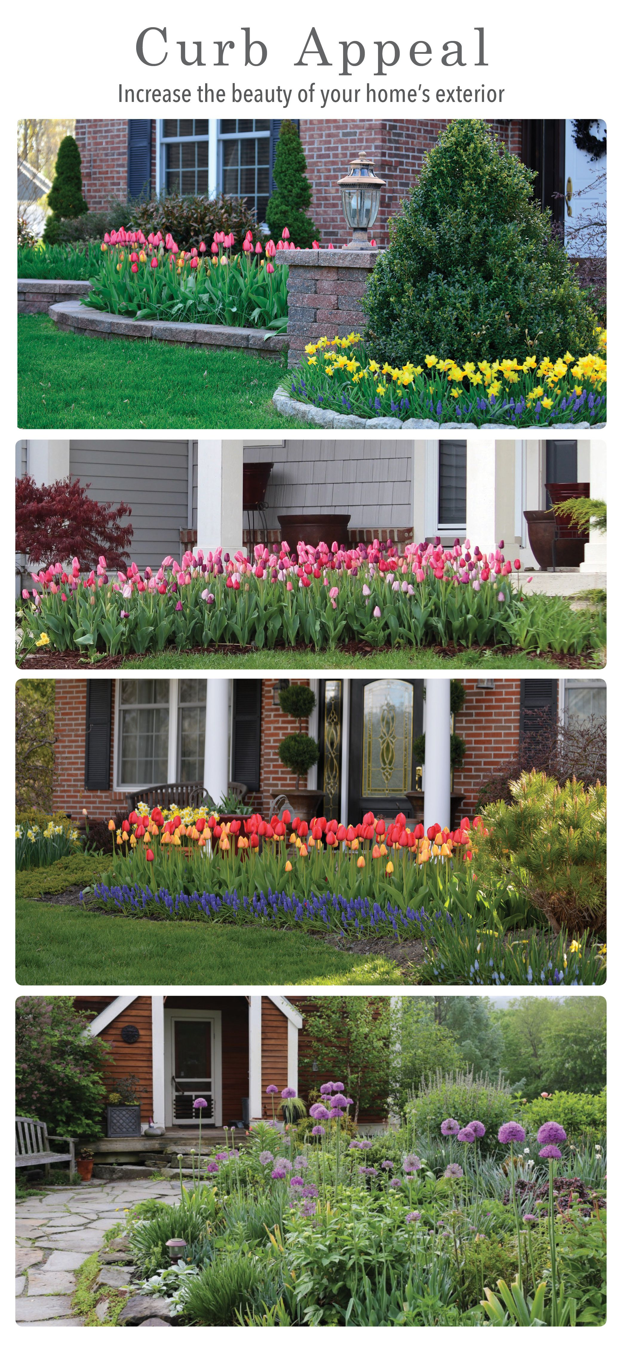 Are You Ready to Enjoy an AMAZING Bulb Garden Next Spring | Blooming ...
