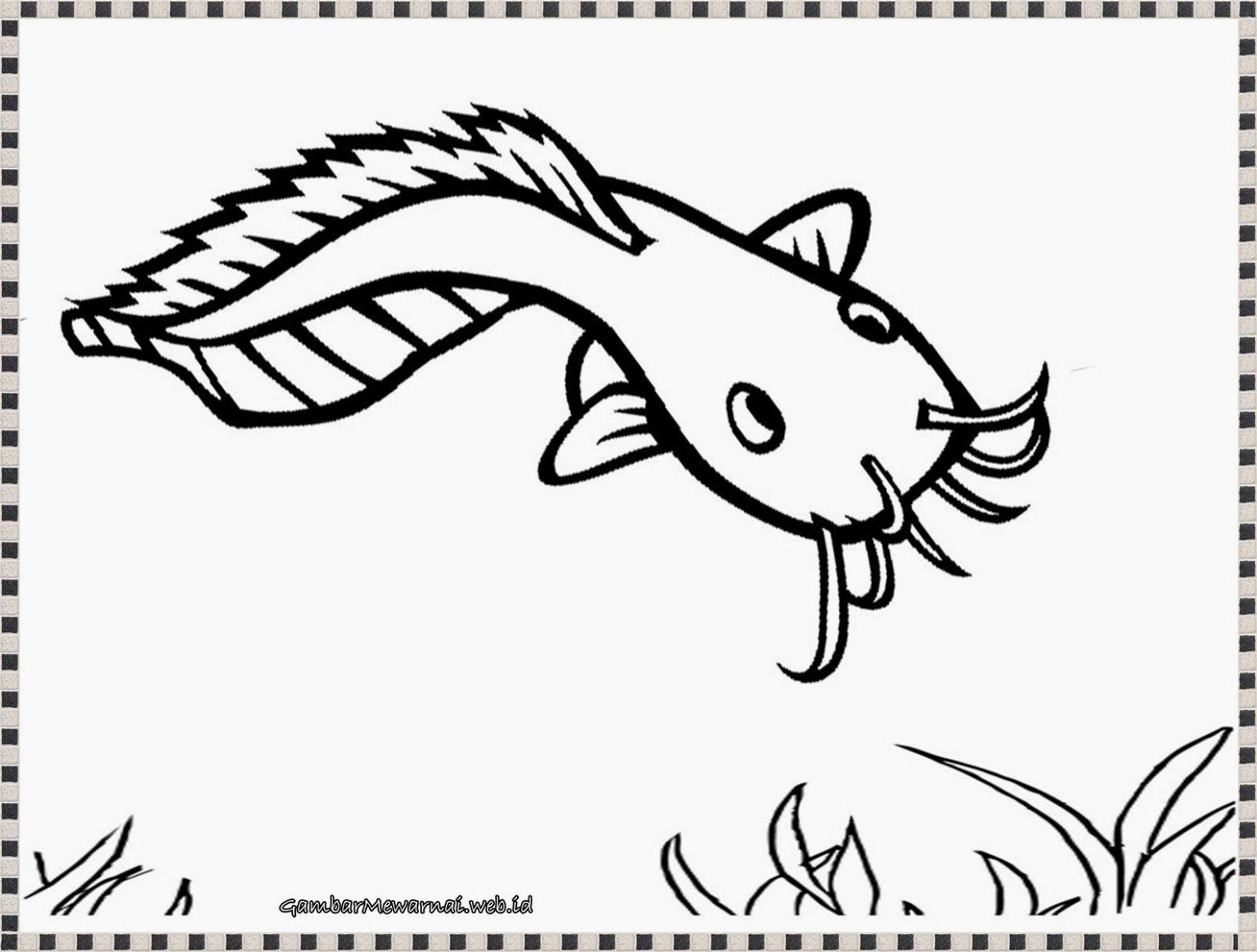 mewarnai gambar ikan lele