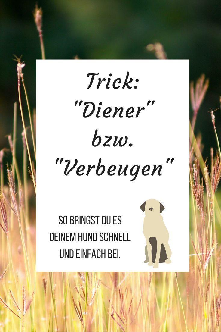 """Hier erfährst Du, wie Du Deinem Hund schnell und einfach den Trick """"Diener"""" bzw. """"Verbeugen"""" beibringen kannst."""