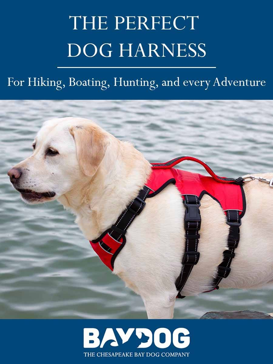 The Best Dog Harness For Hiking And Adventures Baydog Blog Dog