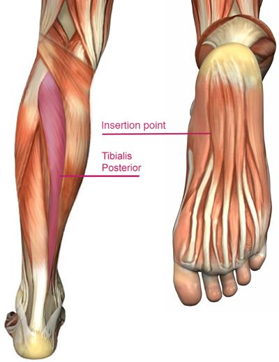 Aches And Pains In The Heel Or In The Bottom Of The Foot Can Be