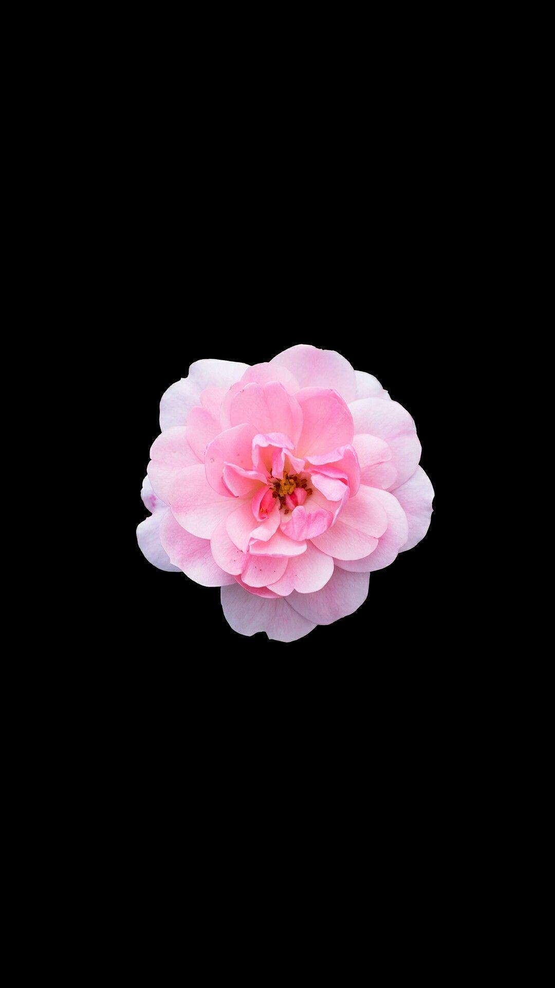 Single Flower Pink Iphone Wallpaper Pink Wallpaper Iphone Flower Iphone Wallpaper Pink Flowers Wallpaper