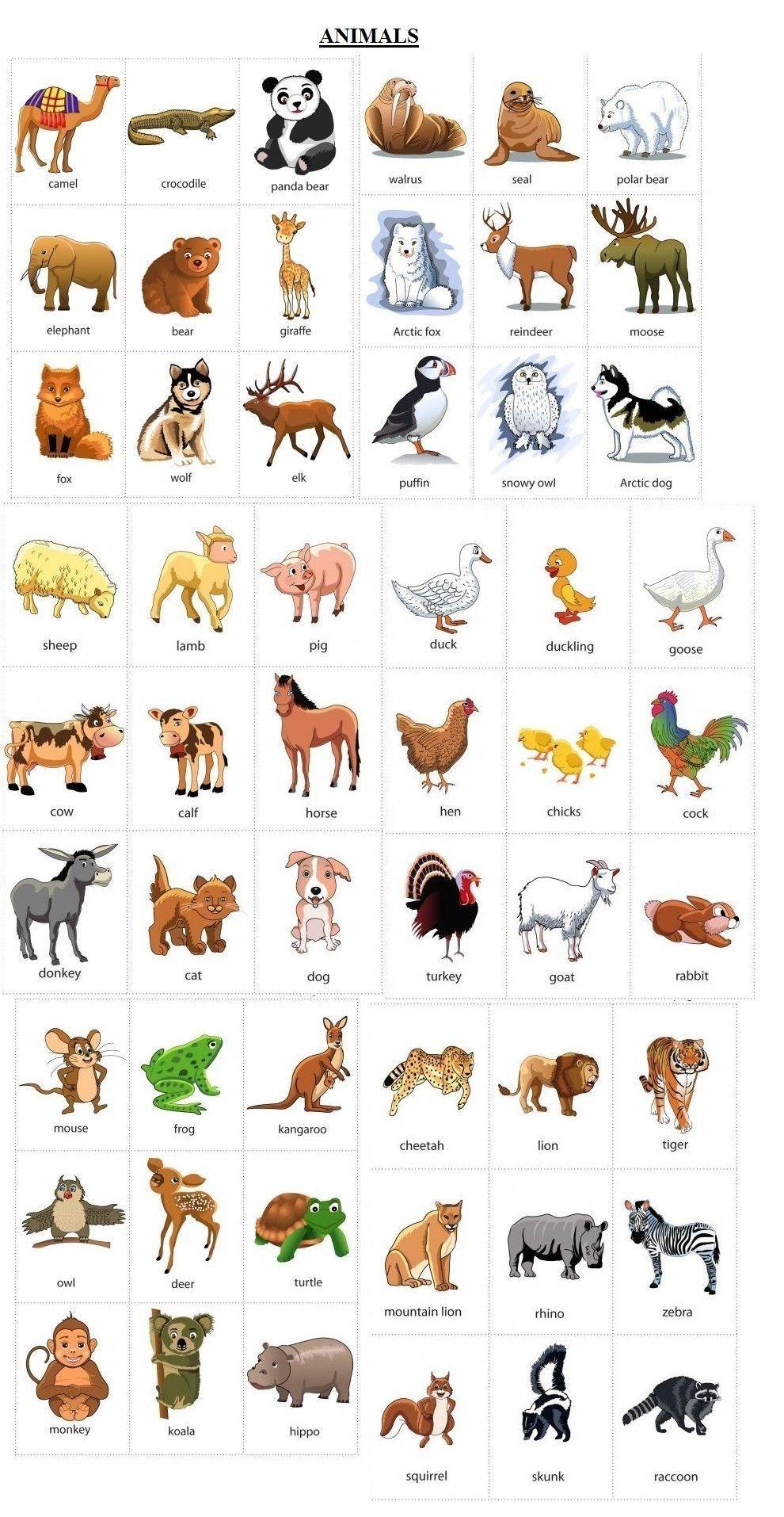 Animali in inglese (con immagini) | Grammatica inglese ...