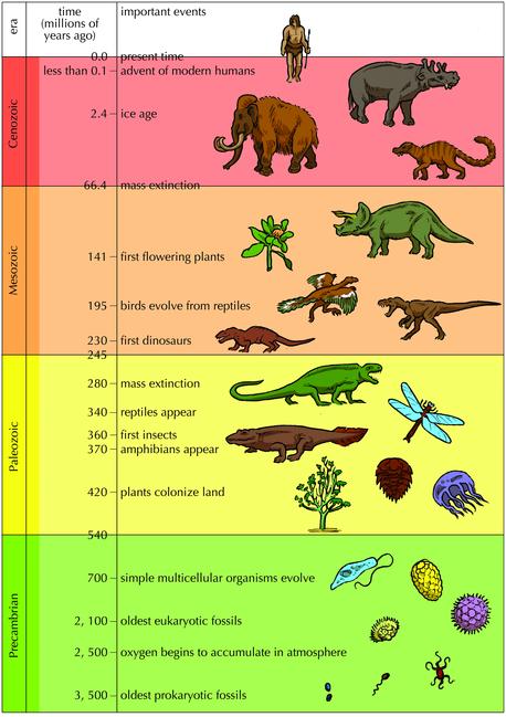 geological timeline - Google Search | Přírodověda - paleontologie ...