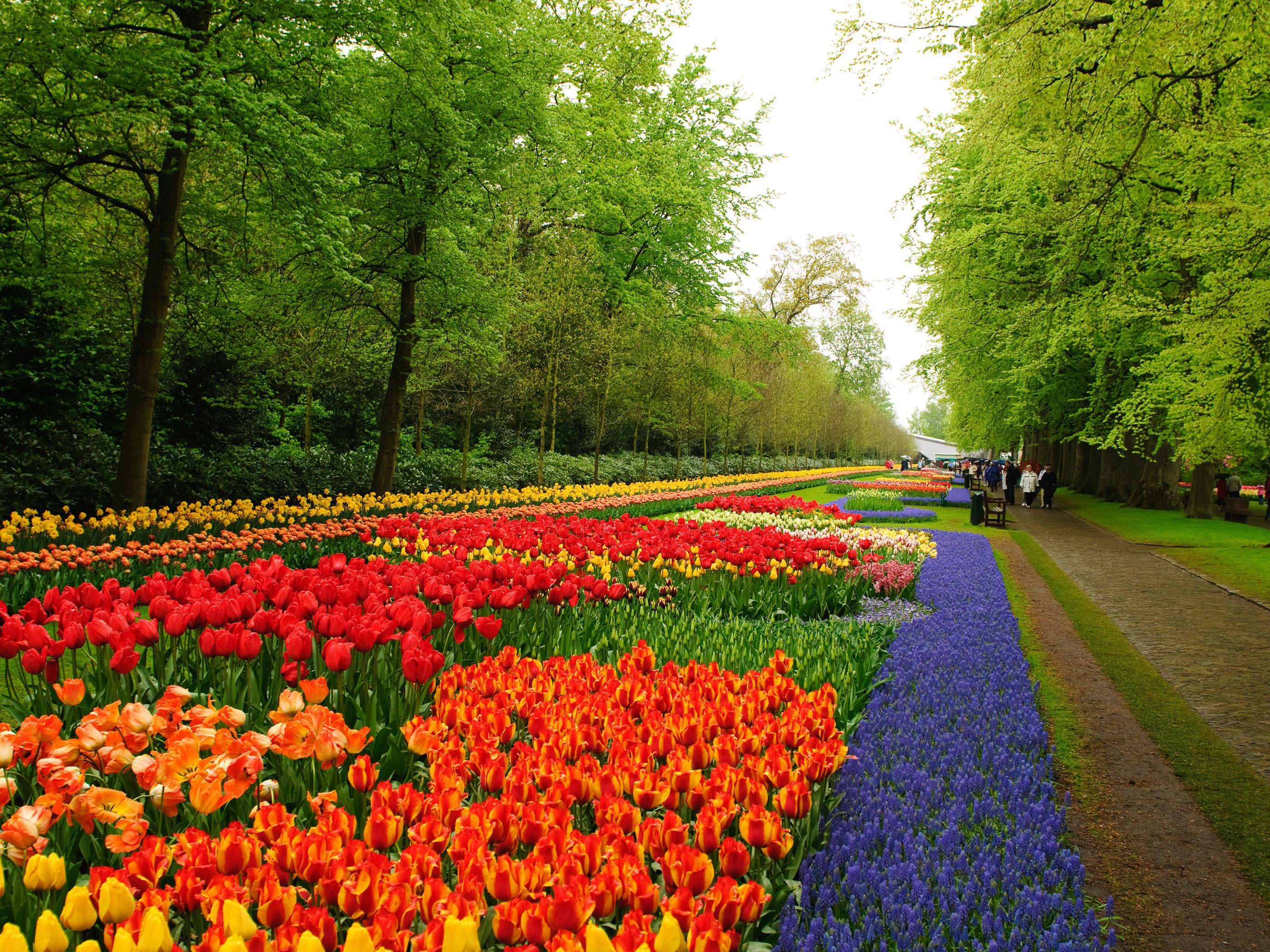flower gardens pictures | niederlande keukenhof flower garden