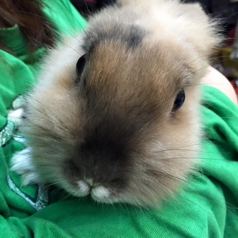 His name is Rimu! #rabbit
